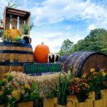 Barrels, hay bales and pumpkins at Gatorland's Halloween event.