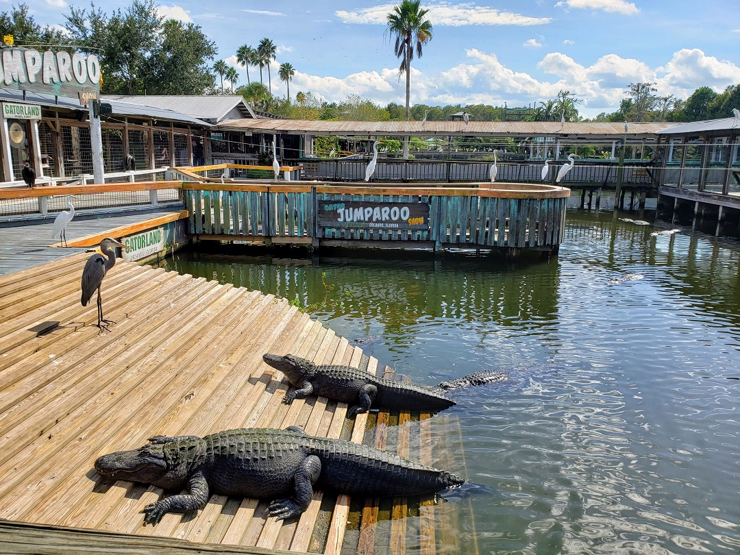 Alligators out sunning themselves on a ramp at Gatorland