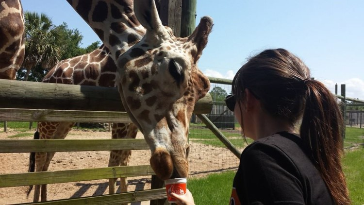 Girl feeding a giraffe at the Gulf Breeze Zoo during a trip to Pensacola, FL.